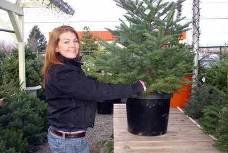Iznajmljivanje živih božićnih drvaca